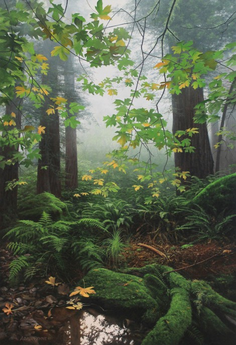 SEQUOIA RAINFOREST, 36×24 (sold)