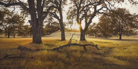 SOUTH FLEMING RANCH, 24×48 (sold)